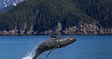 Whale Watching In Augusta Australia