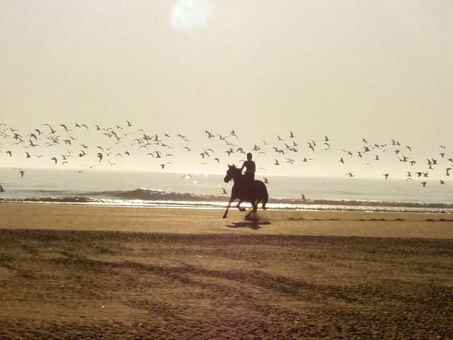 Horse Riding in Tenerife