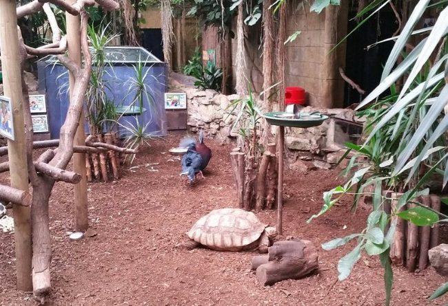 Amazon World Zoo Park Isle of Wight